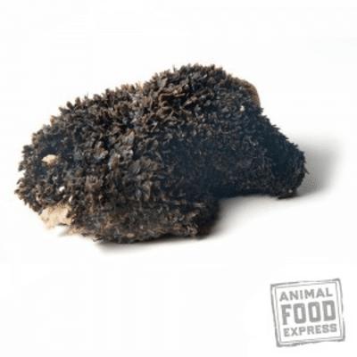 Voorzie je hond van een gevarieerd dieet met runderpens